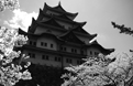 Nagoya Castle in Spring 1