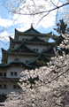 Nagoya Castle in Spring 2